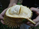 070715_Durian.jpg